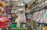 Dog-shopping-for-food