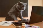 cat-business-money-market-computer.jpg