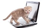 cute-kitten-on-computer