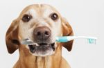 Pet-dental-health