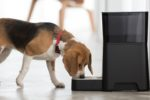 Petnet-dog-beagle-feeder.jpg