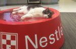 Purina-office-cat