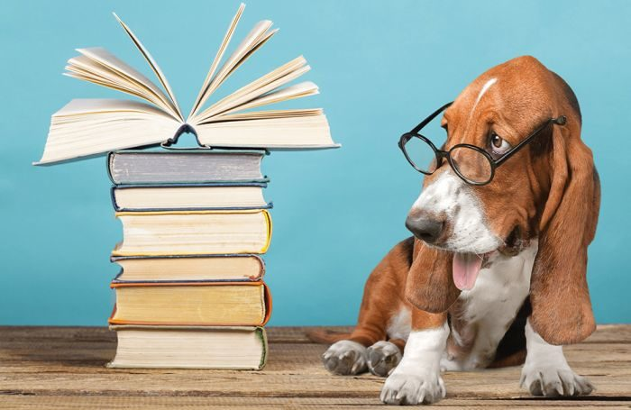 Dog-researching