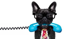 bigstock-Dog-On-The-Phone-179257747.jpg