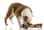 bulldog-bone-dog-treat.jpg