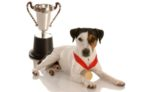 brown-eye-patch-dog-trophy-medal.jpg