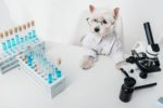 dog-scientist-lab-microscope-laboratory-213926347.jpg
