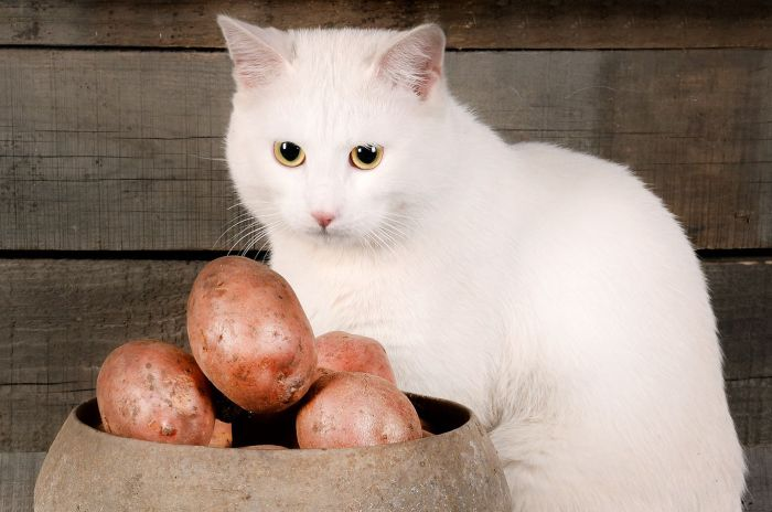 Potatoes present in over 40 % of moist, dry canine meals