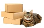 cat-boxes-delivery-mail.jpg