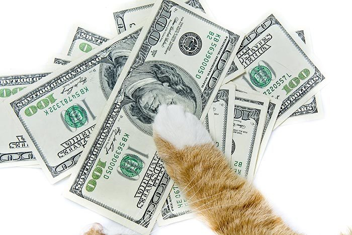 cat paw on money