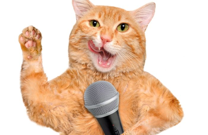 Cat with a microphone