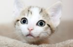 surprised-kitten-face.jpg