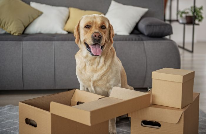 AI canine feeder reorders personal label kibble on Amazon