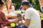 pet owners picnic