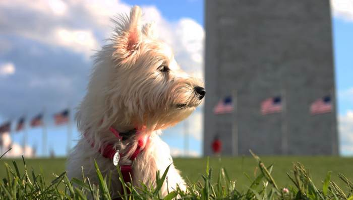 Washington-DC-Better-Cities-for-Pets
