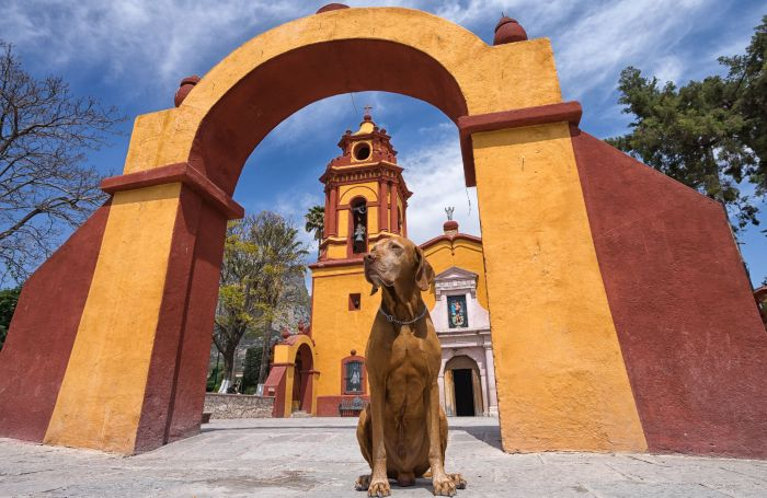 Mexican pet meals business concentrated in 5 states