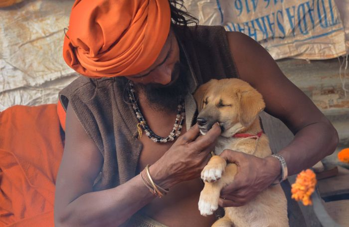 Purina might problem Mars in Indian pet meals market
