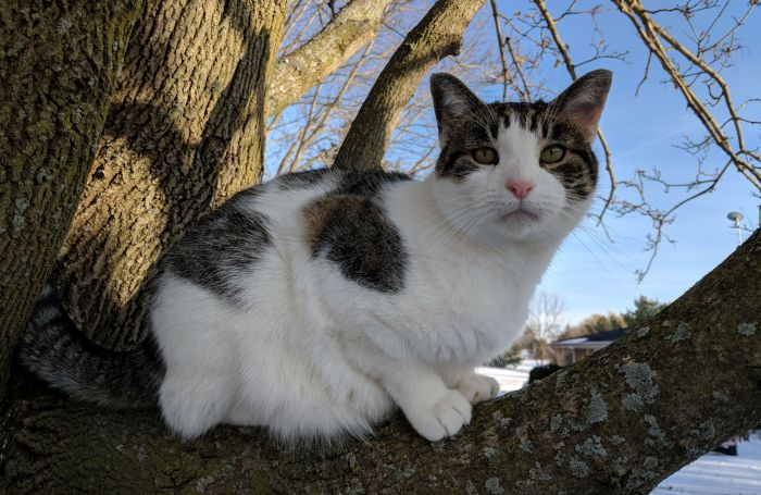 cat-in-tree.jpg