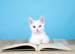 white cat reading book