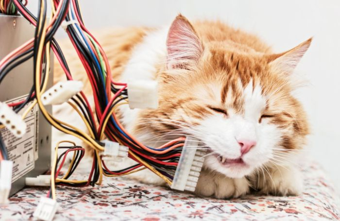 Cat-computer-wires-e-commerce-internet