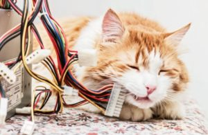 cat-computer-wires-e-commerce-internet.jpg