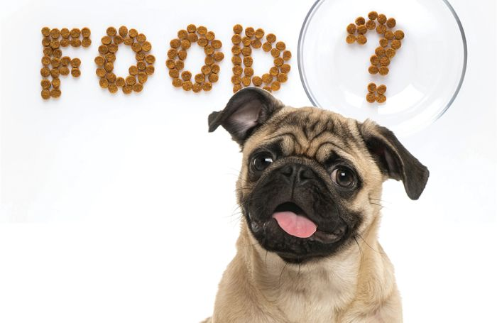 Answering your widespread pet meals market questions