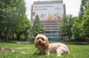 Purina cover PetsAtWork