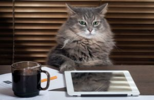 cat-boss-office-tablet-computer-business.jpg