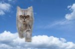 cat-cloud-computing-sky-Persian.jpg