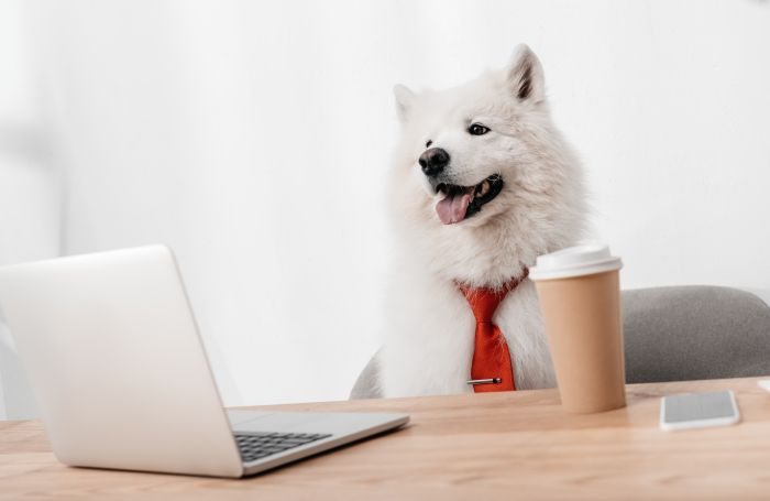 Dog business office computer