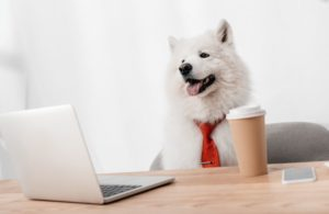 dog-business-office-computer.jpg