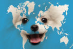 dog face world