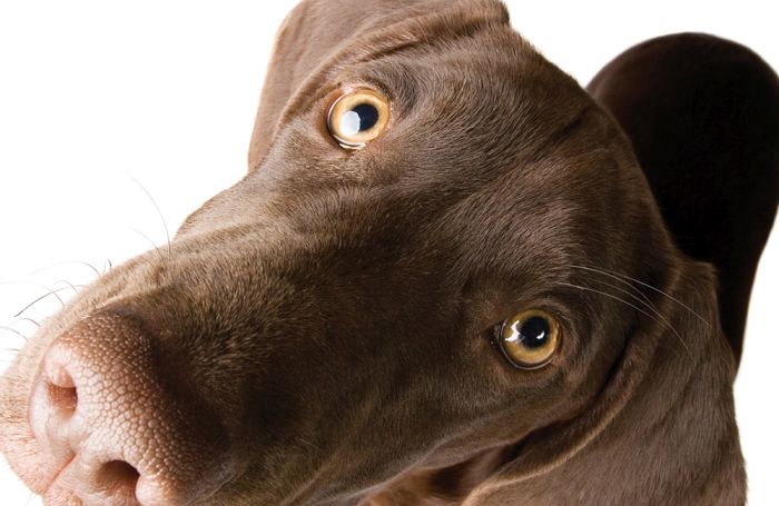 Grain-free pet food alert: Many questions nonetheless to reply