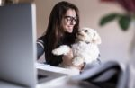 pet owner online shopping