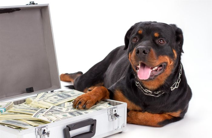 Dog-money-rottweiler-suitcase-guard