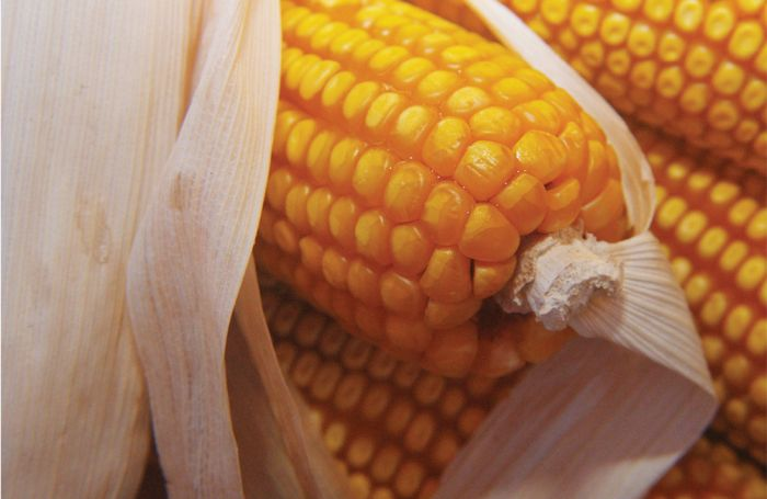 So what's 'proper' about corn in pet diets?