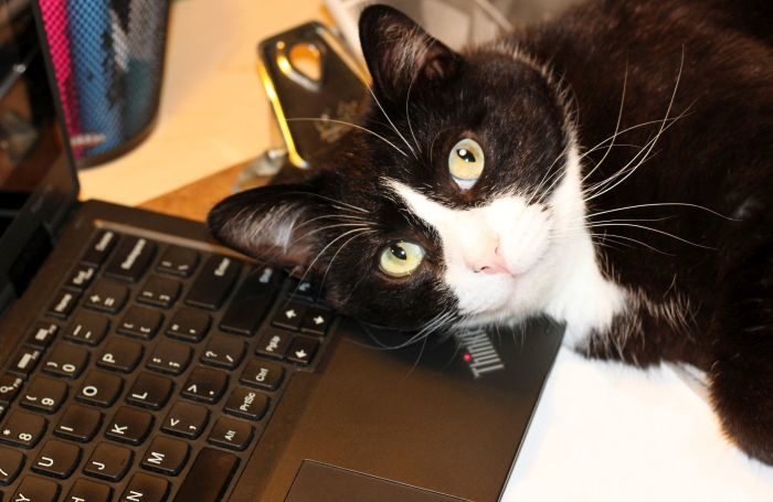 cat-laptop-computer-online.jpg