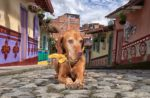 dog-colombia-latin-america.jpg
