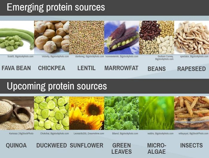 pet-proteins-infographic-cropped