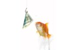 fish-goldfish-dollar-money-cash.jpg