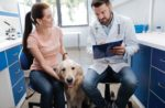 Pet-owner-vet-discussions