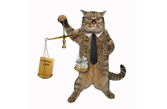Cat-glasses-legal-lawyer-lawsuit-justice-court