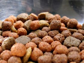dog-food-closeup-in-metal-bowl