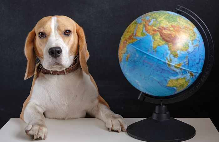 Beagle-dog-globe-global-business