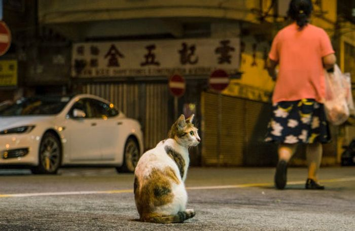 Hong kong street cat