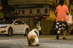 hong-kong-street-cat