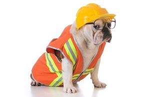 bulldog-construction-building-hard-hat.jpg