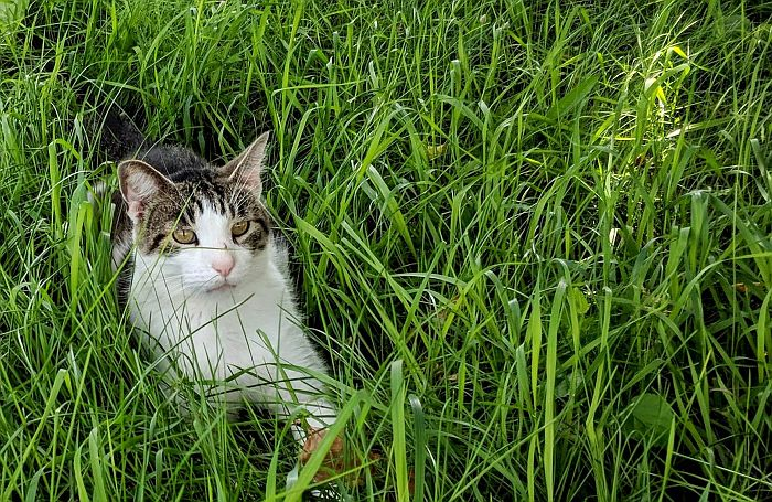 cat-grass-natural-outdoors.jpg