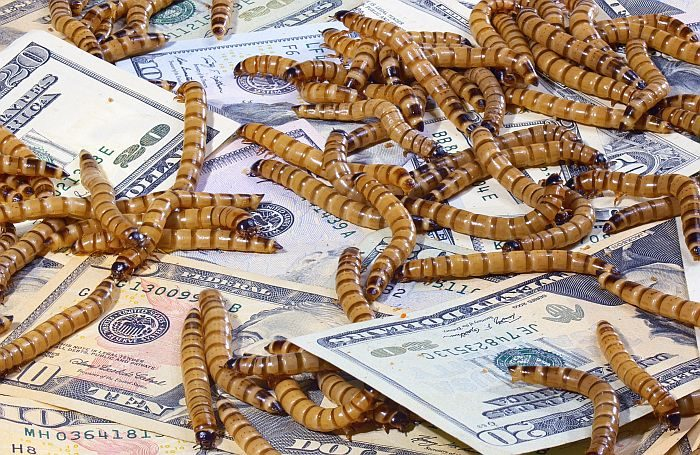 mealworm-money-insect-novel-ingredient.jpg