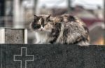 cat-Romania-cemetery-Europe.jpg